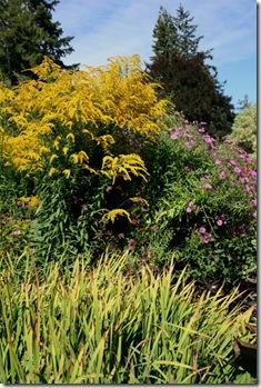 Goldenrod and Asters at Butchart Gardens (photo credit: Jean Potuchek)