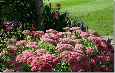 Pink sedum with blue salvia (photo credit: Jean Potuchek)
