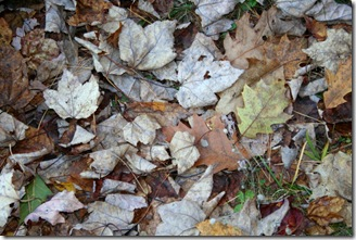 Fallen leaves (photo credit: Jean Potuchek)