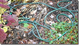 Hoses in flower beds (photo credit: Jean Potuchek)