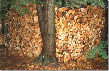 Green wood stacked for seasoning (photo credit: Jean Potuchek)