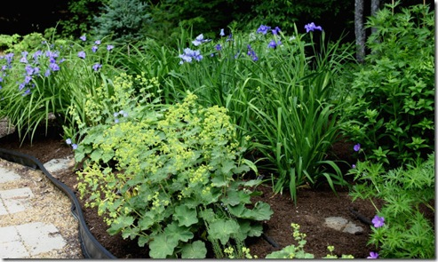 Foliage in the blue and yellow border (photo credit: Jean Potuchek)