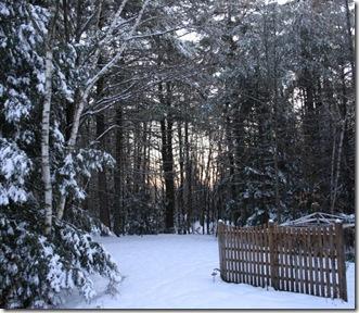 December dawn (photo credit: Jean Potuchek)