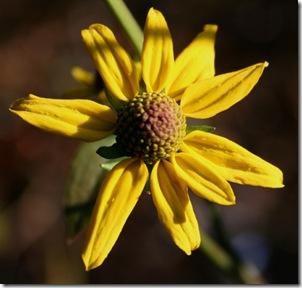 The Little Flower that Could (photo credit: Jean Potuchek)