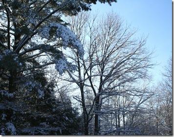 December morning sky (photo credit: Jean Potuchek)
