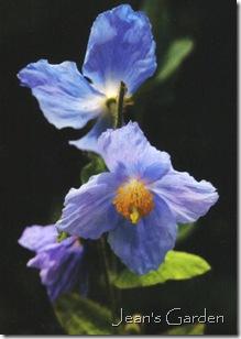 Unknown flower, Kew Gardens, 2000 (photo credit: Jean Potuchek)