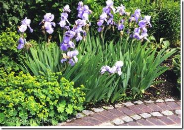 Lady's Mantle and Iris, Kew Gardens, 2000 (photo credit: Jean Potuchek)