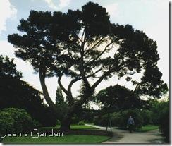 unknown tree, Kew Gardens, 2000 (photo credit: Jean Potuchek)