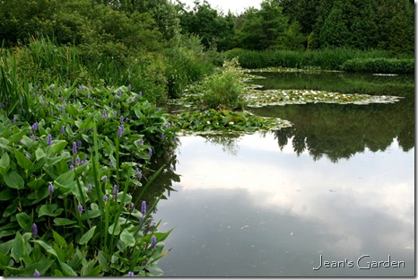 Pickerelweed & Water Lilies in pond, Montreal Botanical Garden (photo credit: Jean Potuchek)