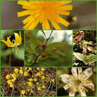 Montage of plants encountered along the trail (photo credits: Jean Potuchek)