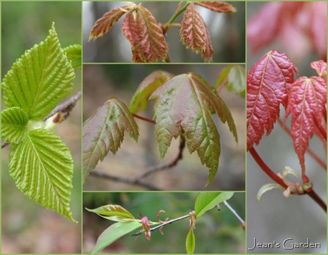 New Leaves (photo credit: Jean Potuchek)