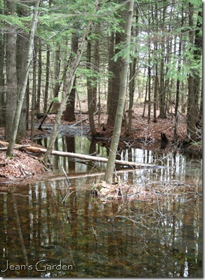 vernal pool (photo credit: Jean Potuchek)