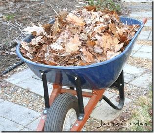 Wheelbarrow load of leaves (photo credit: Jean Potuchek)