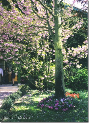 Spring flowering tree at Giverny (photo credit: Jean Potuchek)