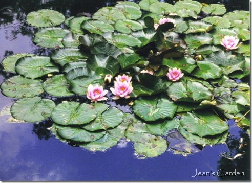 Water lilies at Giverny (photo credit: Jean Potuchek)