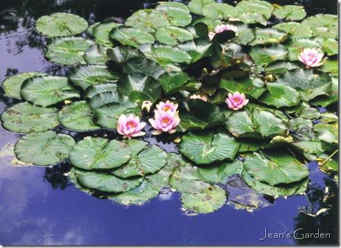 Water lilies at Giverny (photo credit: Jean Potuchek)