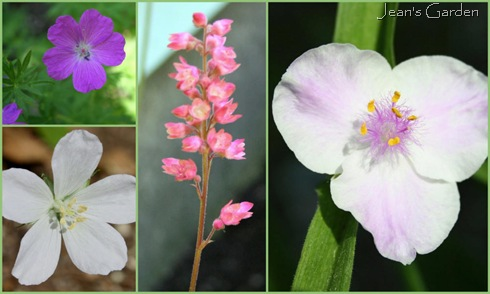 Bedroom border blooms in June (photo credit: Jean Potuchek)