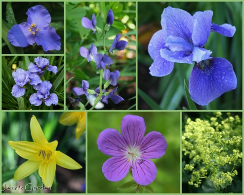Blue and yellow border blooms in June (photo credits: Jean Potuchek)
