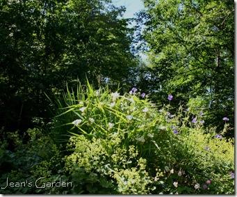 Summer solstice garden (photo credit: Jean Potuchek)