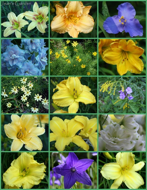 July blooms in the blue and yellow border (photo credits: Jean Potuchek)