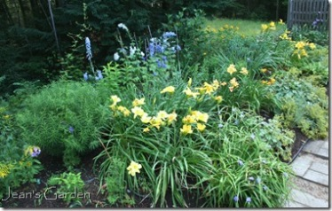 Blue and yellow border in July (photo credit: Jean Potuchek)