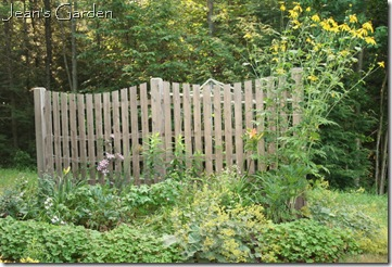 Fence border in July (photo credit: Jean Potuchek)