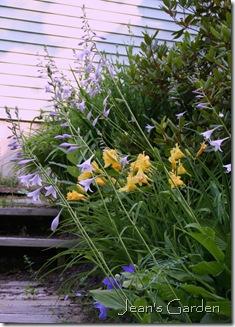 Flowering hosta scapes on the back slope (photo crredit: Jean Potuchek)
