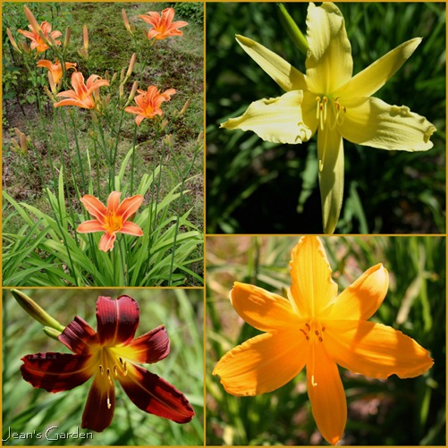 Daylilies growing at front of property (photo credits: Jean Potuchek)