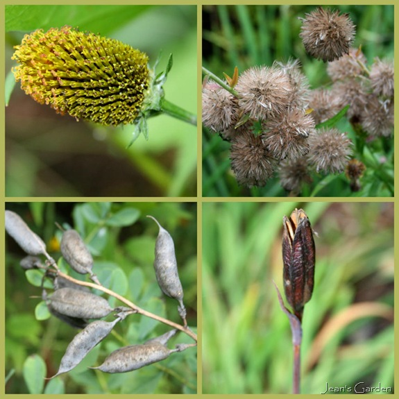 September seedheads (photo credit: Jean Potuchek)