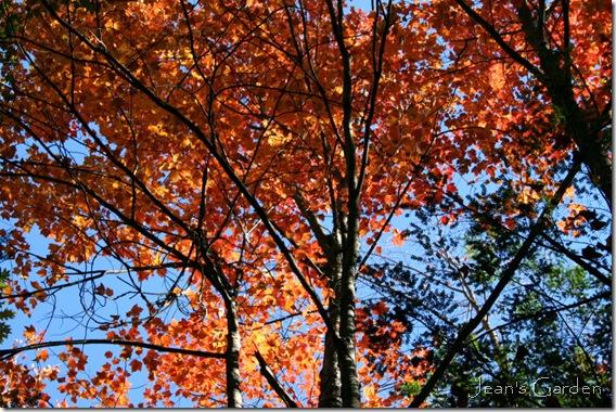 fall foliage and October sky (photo credit: Jean Potuchek)