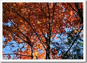 Fall foliage (photo credit: Jean Potuchek)