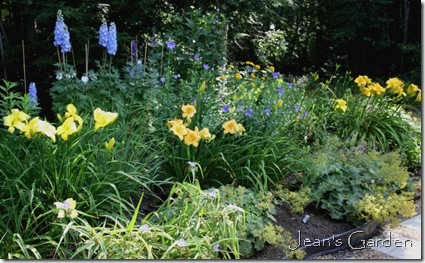 Blue and yellow border in high summer (photo credit: Jean Potuchek)