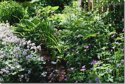 Deck border in early summer (photo credit: Jean Potuchek)