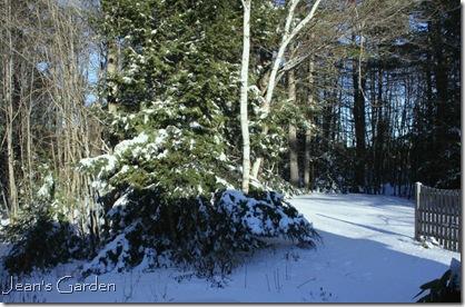 The garden in winter (photo credit: Jean Potuchek)