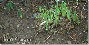 New spring growth (photo credit: Jean Potuchek)