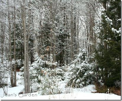 Woods in March snow (photo credit: Jean Potuchek)