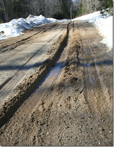 Muddy ruts forming on the dirt road (photo credit: Jean Potuchek)
