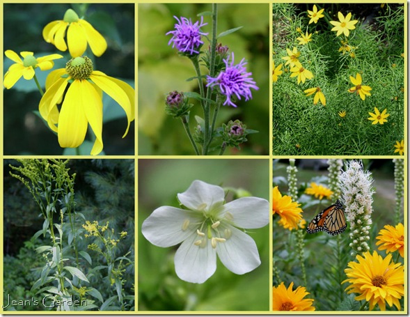 Native plants in my Maine garden (photo credit: Jean Potuchek)
