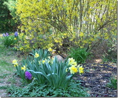 My Gettysburg garden in April (photo credit: Jean Potuchek)