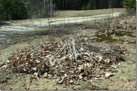 Circular bed before spring clean-up (photo credit: Jean Potuchek)