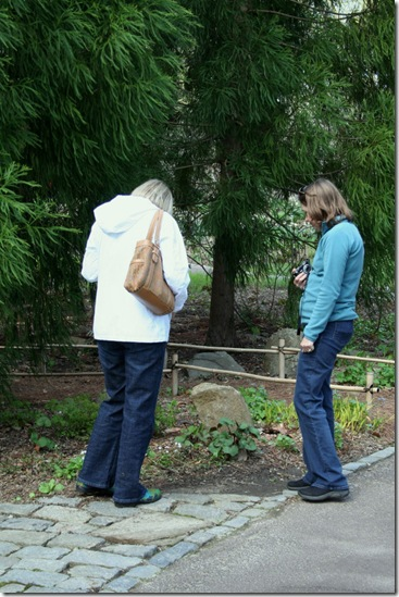 Carolyn (right) and Jan (left) confer over a plant identification (photo credit: Jean Potuchek)