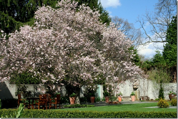 Chanticleer terrace in April (photo credit: Jean Potuchek)