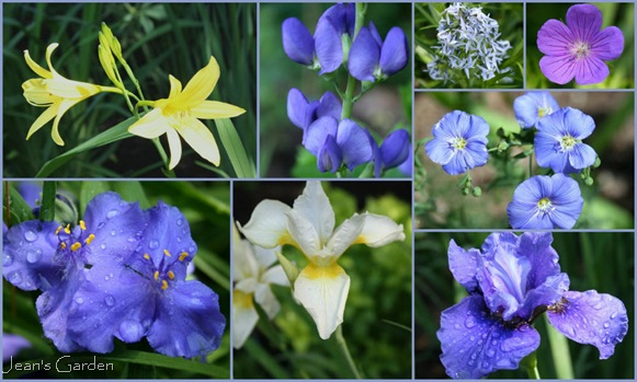 June blooms in the blue and yellow border (photo credits: Jean Potuchek)