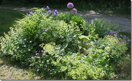 the circular bed in mid-June (photo credit: Jean Potuchek)