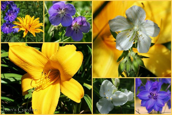 Clockwise from top left: Heliopsis 'Bressingham Doubloon' with Delphinium 'Pagan Purple', Geranium x 'Brookside', Geranium pratense 'Splish-Splash', detail of Delphinium 'Pagan Purple', Tradescantia 'Danielle', gold daylily (photo credits: Jean Potuchek)