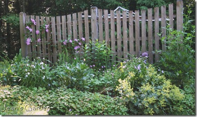 Fence border in July (photo credit: Jean Potuchek)