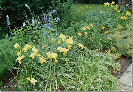 daylilies blooming in the blue and yellow border (photo credit: Jean Potuchek)