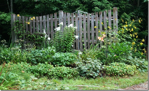 The fence border in August (photo credit: Jean Potuchek)