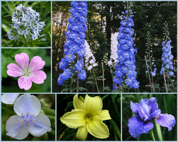 Plants that I have featured in popular posts - clockwise from top right: delphinium, Siberian iris, daylilies, tradescantia, hardy geranium, amsonia (photo credits: Jean Potuchek)