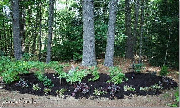 Newly planted serenity garden, August 2011 (photo credit: Jean Potuchek)